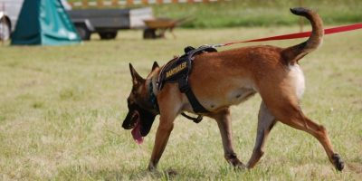 cropped-search-dog-620175_19201-1024x420
